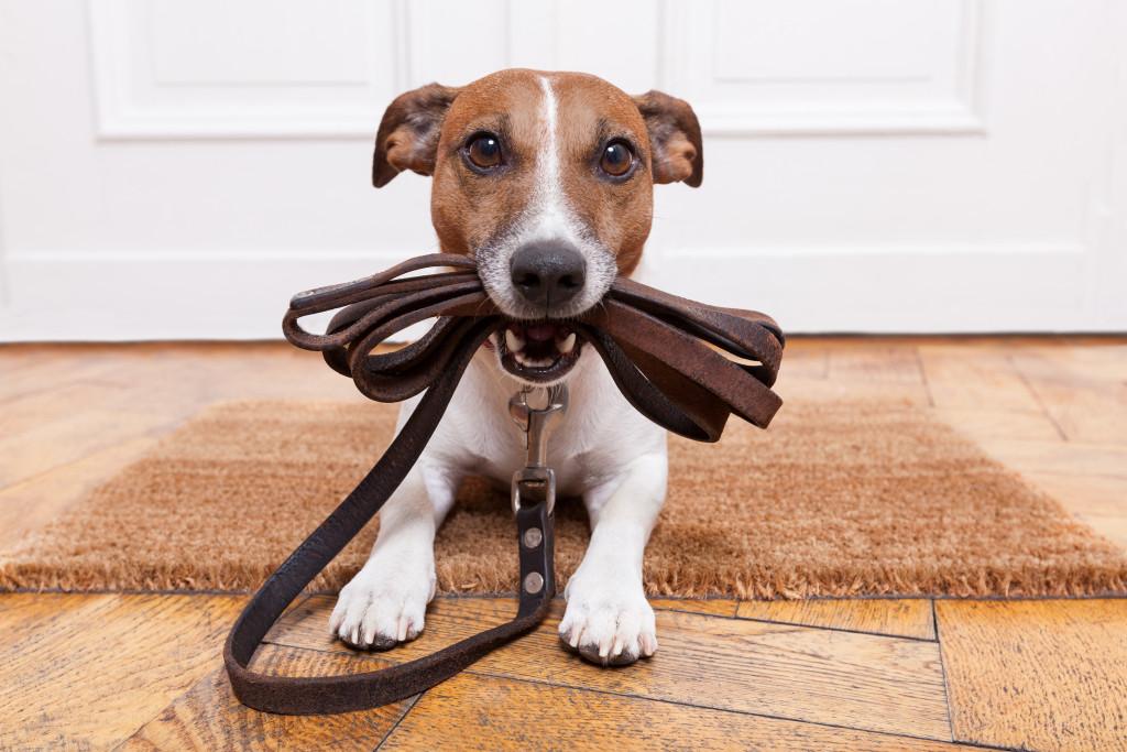 pet dog holding leash